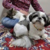 お預かりして2週間、仲良く寄り添う犬と猫