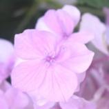 『真夏の沖縄(2)』の画像