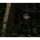 『探り飛ぶ』の画像