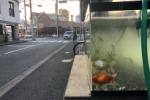 イズミヤ近くのヘアサロン「ワザイカ」にでっかい水槽が登場し癒し空間!〜金魚も泳いでて設置は10日前くらいからだそうな〜