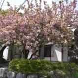 『春の秋月散策』の画像