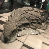 生きた姿をほぼ完全に保つ「恐竜のミイラ」がスゴイ