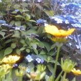『紫陽花の見える風景』の画像