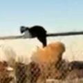 1匹のネコがフェンスの上で動かない。どうしたのかな? → こういうことでした…