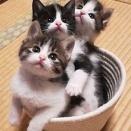 【ねこ】部屋を動き回るザルの正体は? 子猫の尻尾がチラ見えするザルに「和風ルンバ」「虚無僧だな」の声