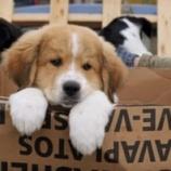 『犬と人の絆を描く感動の映画での虐待問題』の画像