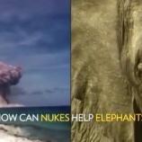 『核実験と象牙』の画像