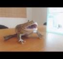 【動画】カエル、縄張りを荒らしたよそ者にブチギレ。殴り合いの喧嘩に発展してしまう