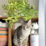 『きょうのいちまい・トラディスは猫にはよくないみたいです』の画像
