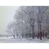 『雪の朝』の画像