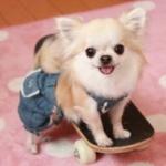 釈由美子の犬、日本酒飲んで死亡