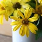 『【ピノ子日記】猛暑の中で咲く庭の花』の画像