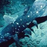『シーラカンスとかいうカッコ良すぎる古代魚』の画像
