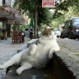 『 地球ドラマチック「解明!ネコの不思議」⑤』の画像