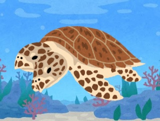 とっても珍しい!頭が2つあるウミガメの赤ちゃんが発見される アメリカ