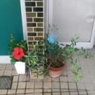 『(´-ω-`)小屋のお庭』の画像