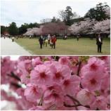 『2017 京都の花見』の画像