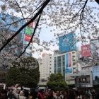 『2019年春!渋谷・代々木公園でお花見してきたでござるッ!』の画像