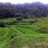 『運よく曇り空の下での草取り作業』の画像