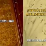 【動画】中国、ホテルで寝ていたら顔に違和感…、電気を付けたら虫が大量発生してた!