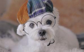 ベレー帽が似合うかわいいワンコ