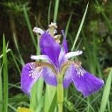 『五月の花②』の画像