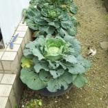 『農園6』の画像