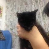 黒猫ジジ、無事里親決まりました!のサムネイル