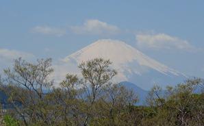 「吾妻山公園」の頂上から富士山と海を望む