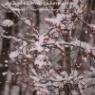 【庭の冬支度】お疲れ様と小さな自信と冬の時間と