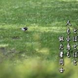 『木陰求めて』の画像