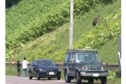 【北海道】観光客とヒグマ超接近 わずか2m…車から降り写真撮影 警察が注意呼びかけ 知床半島