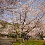 『桜満開\(^o^)/』の画像