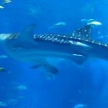 『沖縄へ(4)美らうみ水族館』の画像