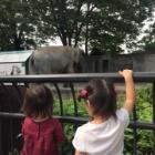 『井の頭動物園』の画像