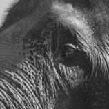 『ゾウの子守唄』の画像