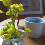 うさぎカフェのブログ**【うさぎさん同伴OKなカフェ編】