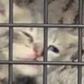 子ネコがクレートの中にいた。ここから出せぇ~! → 萌獣、激おこです…