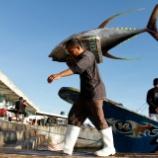 『【マジかよ】若者の間で「マグロ漁師」の志願者が続出!!きっかけはYouTube』の画像