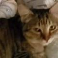 【ネコ】 赤ちゃんが揺れる「ゆりかご」の中にいた。ここはなかなか良いところにゃ♪ → 猫はこんな感じ…