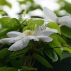 『バラと草花の咲く初夏の庭写真集』の画像