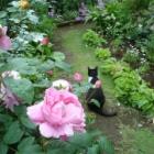 『愛猫ソラ13年6ヶ月の猫生を終え天国に還る。』の画像