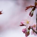 『五感で感じる季節The season that feels with five senses.』の画像
