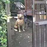 『防犯犬』の画像