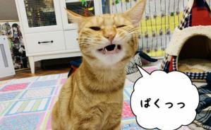 """野生の""""カケラ""""も見当たらない猫"""