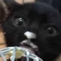 子猫たちに「ホイッパー」についたクリームをあげてみた。これは美味しいにゃ♪ → 1匹の子猫はこうなった…