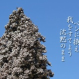 『DANCES WITH WOLVES』の画像