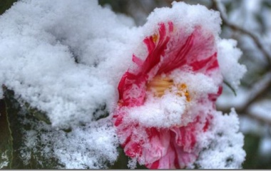 『雪が降りました!』の画像