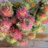 『こぼれ話 第14話「南国フルーツ真っ盛り!」』の画像