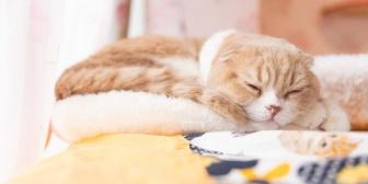 私「初めて猫に触れた時(15年前)どこを持てばいいかわからなかったなー」 メンバーからのメール「4匹も同時に飼っていて抱く事すら出来ないのはどうかと思います」